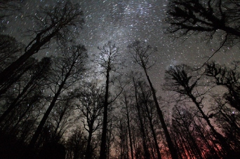 night forest stars